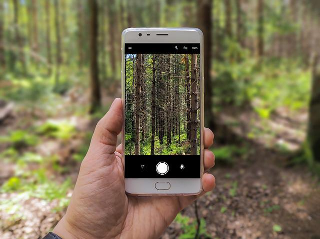 Phone, Photography, Shot, Forest, Camera, Mobile, Photo