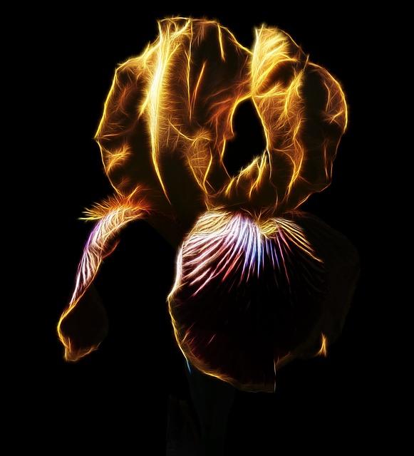 Fractalius, Photo Art, Iris, High Beard Iris, Nature