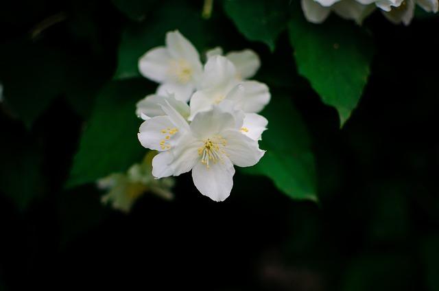 Macro, Photo, Flowers, Nature, Forest, Photographer