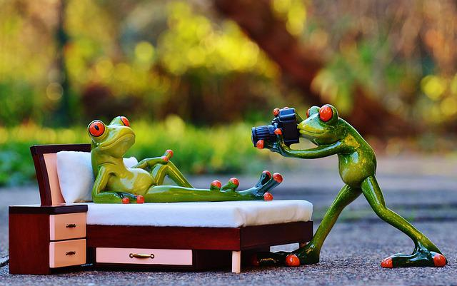 Photographer, Frog, Photo Shoot, Funny, Camera, Fun