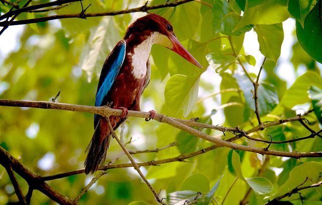 Nature, Kingfisher, Photography, Photographer, Photos