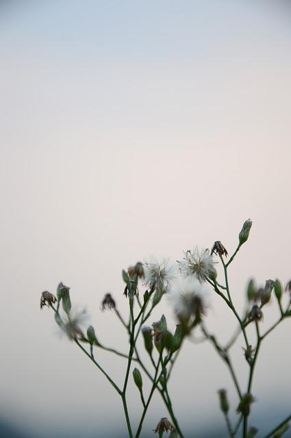 Grass, Photography, Natural, Plant, Flower, White