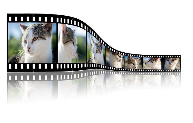 Cat, Video, Photo, Photographer, Photos, Studio, Camera