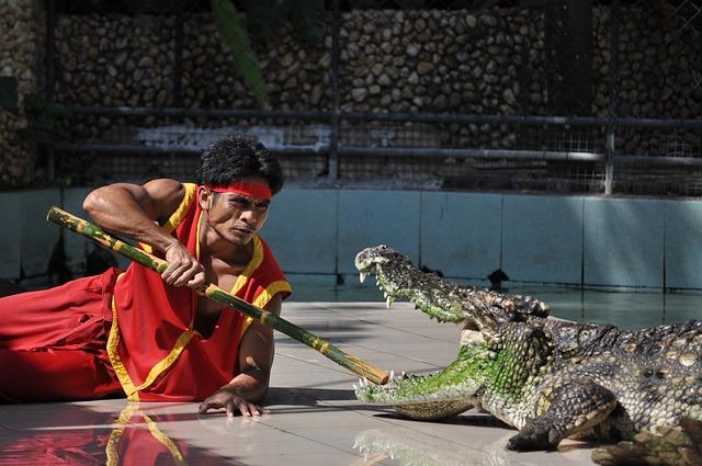 Phuket, Phuket Zoo, Crocodile