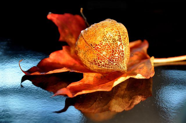 Autumn, Physalis, Lampionblume, Nature, Plant, Orange