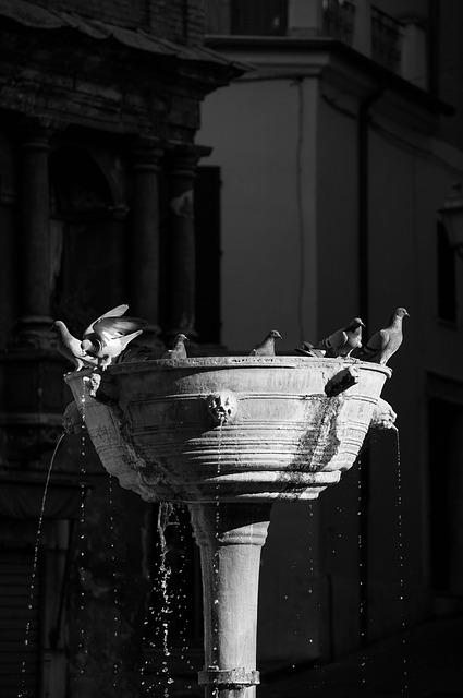 Fontana, Pigeons, Narni, Pigeon Fountain, Water, Pigeon