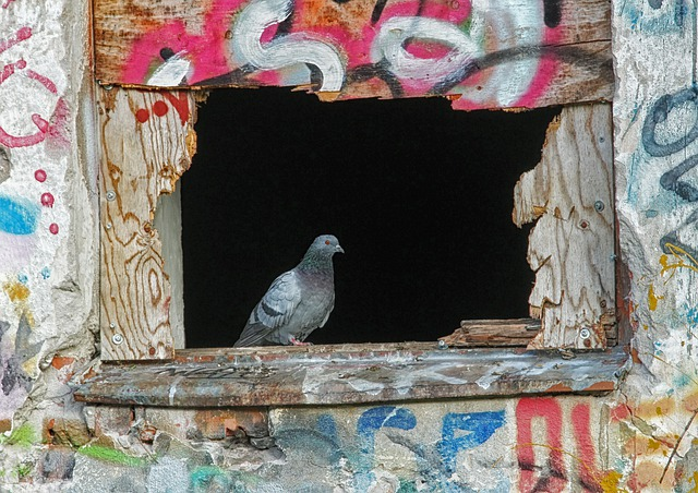 Pigeon, Bird, Window, Graffiti, Sill, Outside