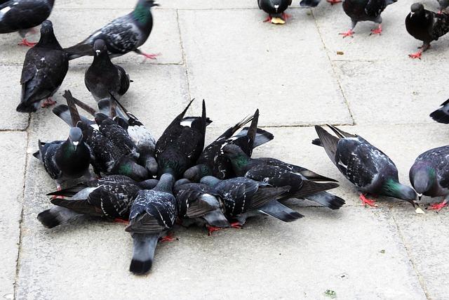 Pigeons, Birds, Close
