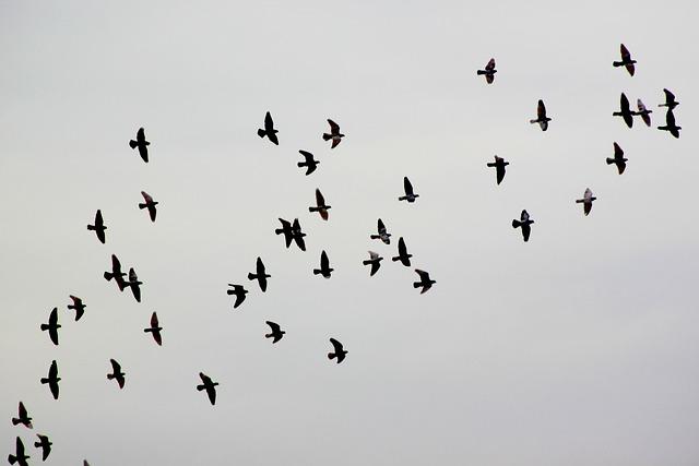 Bird, Pigeon, Pigeons, Animal