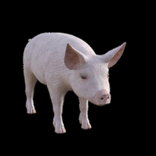 Pig, Farm, Piglet, Animals, Cute, Pigs, Livestock