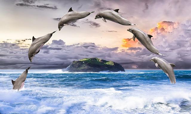 Dolphin, Marine Mammals, Pinball, Jump, Meeresbewohner