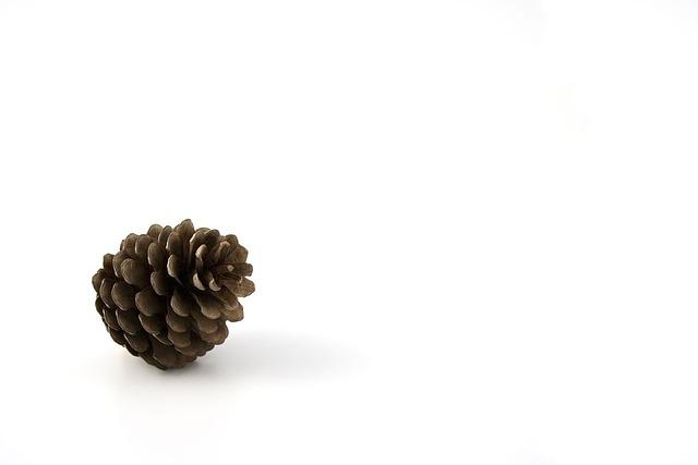 Pine, Cone, Autumn, Background, Botanic, Christmas