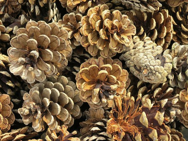 Pine Cones, Pine, Conifer, Tap, Close, Nature, Scale