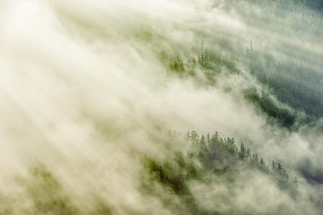 Forest, Fog, Rays, Pine, Nature, Trees, Landscape