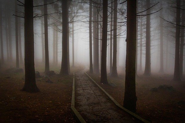 Pine, Forest, Forest Road, Misty, Mystic, Pine Wood