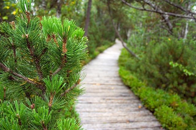 Path, Peat, Moor, Green, Branch, Pine, Tree
