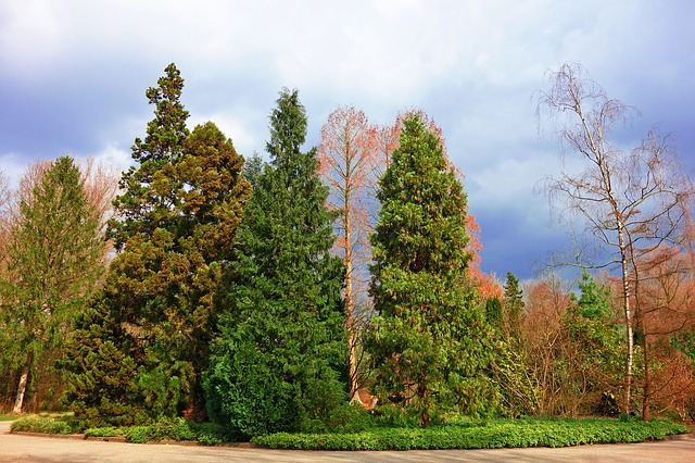 Conifer, Pine, Pine Tree, Evergreen, Row, Park