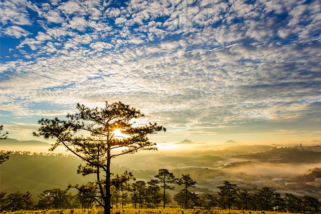 The Sun, Dew Early, Dawn, Pine Trees, Sky, Clouds