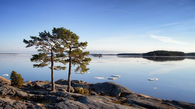 Tree, Pine, Pine Trees, Green, Nature, Season, Branch