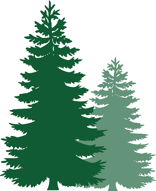 Pine Trees, Spruce Trees, Evergreen Trees, Tree, Spruce