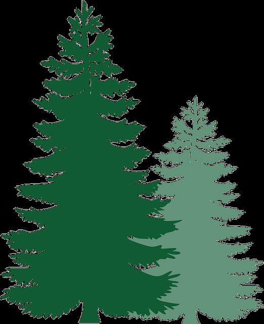 Pine Trees, Spruce Trees, Evergreen Trees, Tree, Spruce
