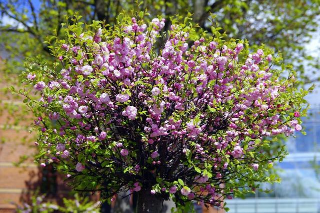Almond, Flowers, Pink, Dashing, Plant, Tree, Tonsil