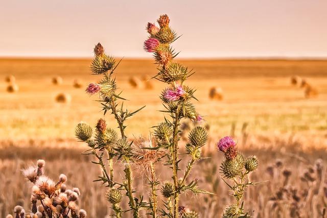 Nature, Autumn, Diestel, Sting, Prickly, Pink, Blossom