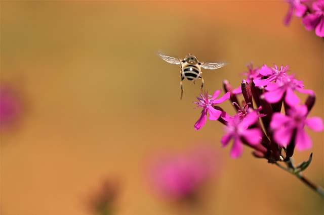 Bee, Plants, Blossom, Pink Flower, Pink, Spring Flowers