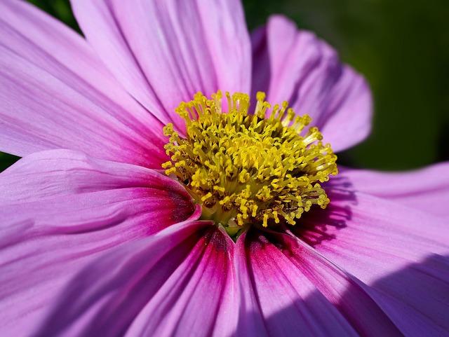 Blossom, Bloom, Nature, Plant, Flower, Pink