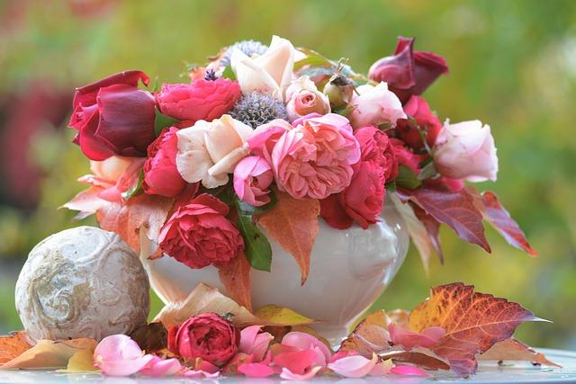Rose, Autumn, Flower, Blossom, Bloom, Pink, Nature