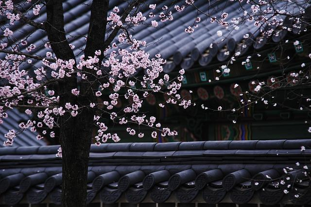 Korea, Traditional, Tree, Roofs, Blossom, Pink, Flowers