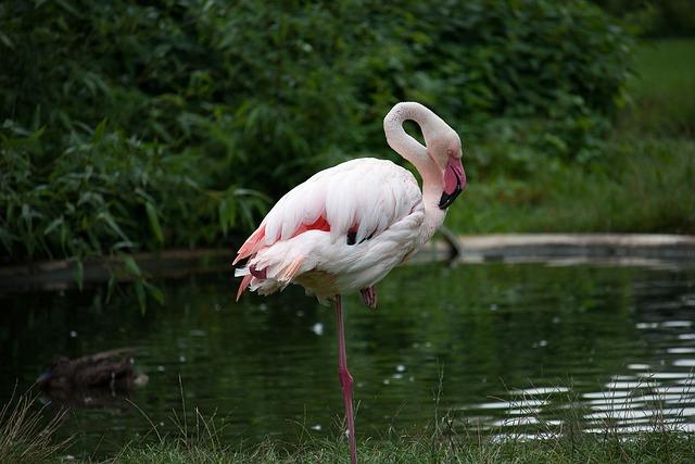 Flamingo, Animal, Water Bird, Pink, Zoo