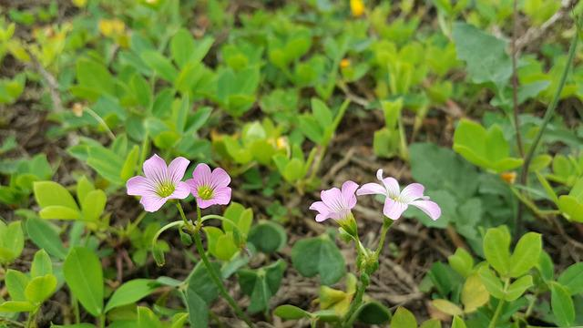 Pink Flower, Green, Spring