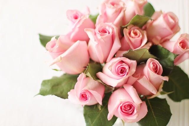 Roses, Pink, Pink Roses, Valentines Day, Flower, Petal