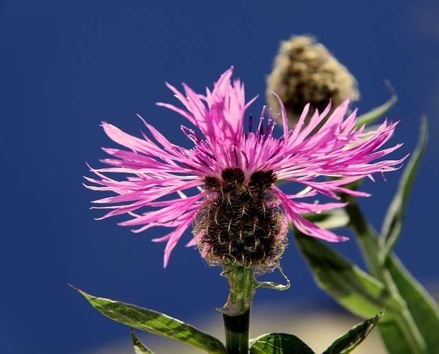 Flower, Pink, Pink Flower, Nature