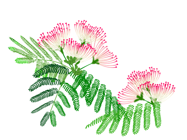 Albizzia Julibrissin, Flowers, Pink, Plant