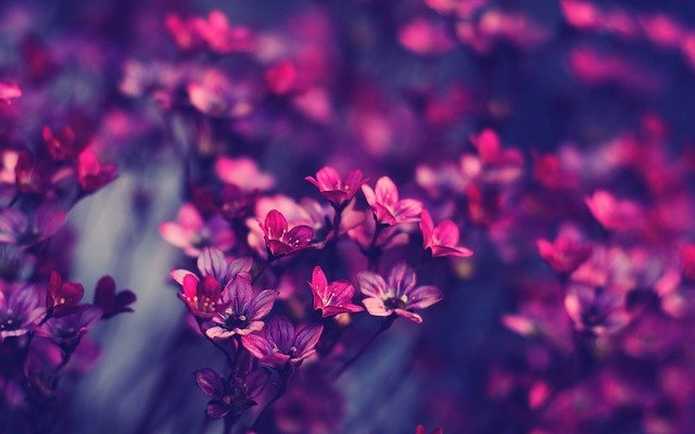 Bloom, Blossom, Close-up, Flora, Flowers, Macro, Pink