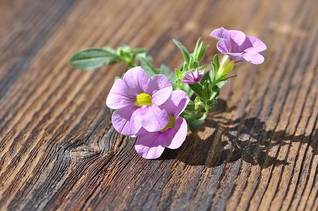 Flower, Flowers, Pink, Zauberglockchen, Wood, Close