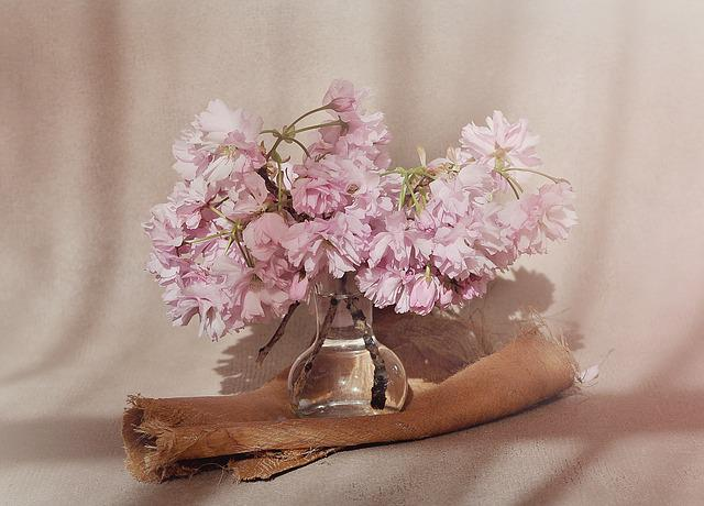 Flowers, Cherry Blossoms, Flowering Twig, Pink