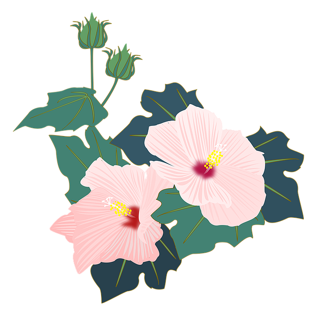 Hibiscus, Furong, Pink, Flowers