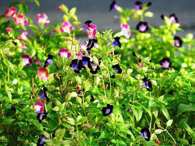 Little Flowers, Garden, Pink Flowers, Blue Flowers
