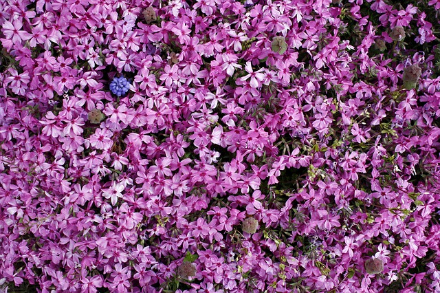 Flowers, Nature, Pink, Spring