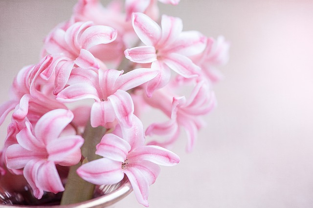 Flower, Hyacinth, Pink Flower, Pink Hyacinth, Flowers