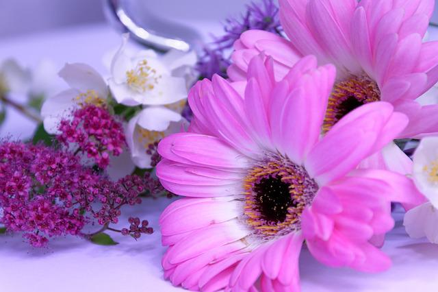 Flower, Gerbera, Jasmin, Pink, Tender, At Home, Joy
