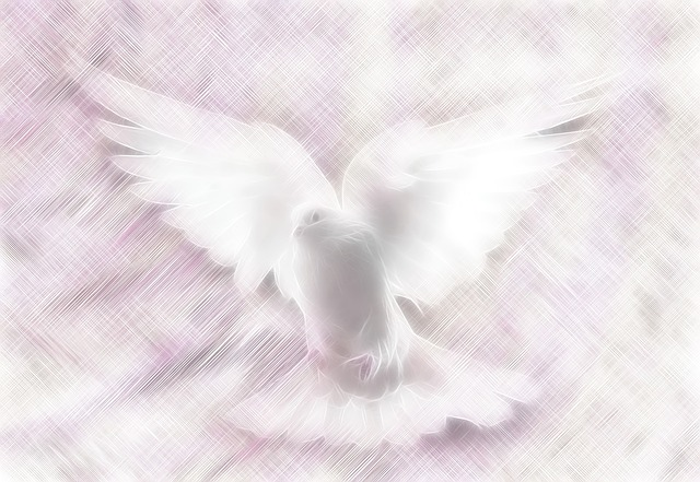 Dove, Stationary, Background, Wallpaper, Pink, Love