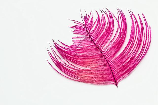 Feather, Desktop Wallpaper, Ostrich Feather, Pink