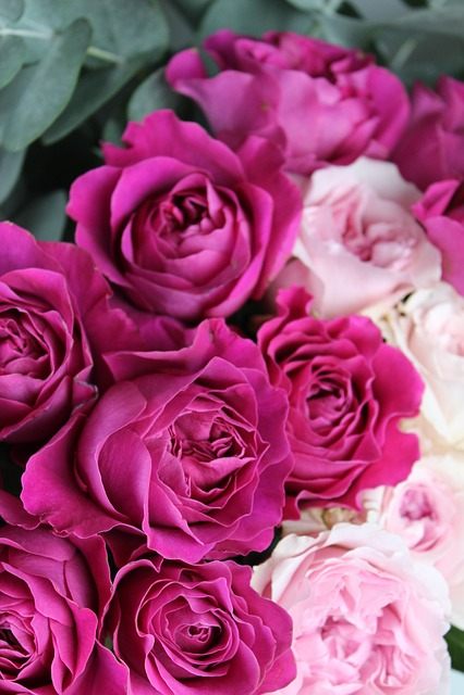 Flower, Roses, Garden Roses, Pink, Pink Roses