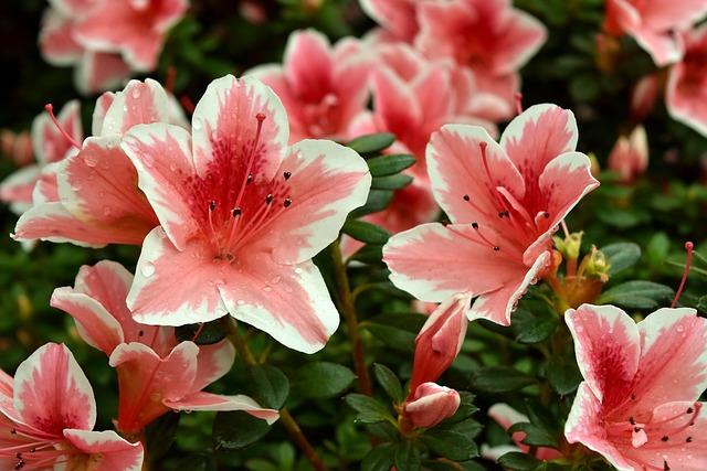 Flower, Spring Flower, Pink, White, Nature, Plant