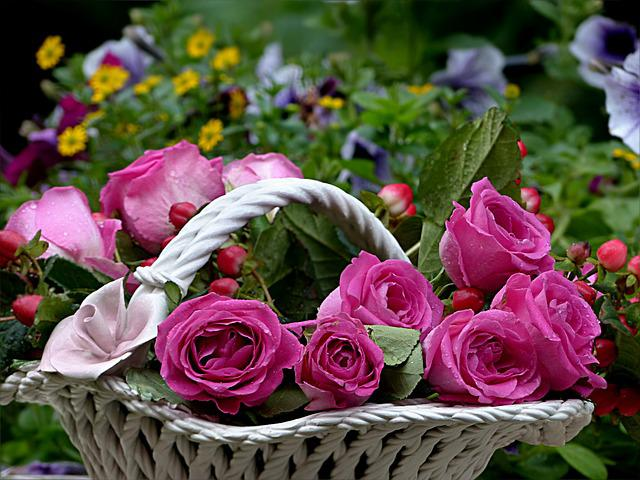 Flower, Rose, Pink, Flower Bowl, Colorful, Beautiful