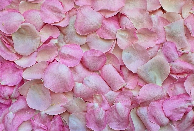 Rose Petals, Pink, Background, Love, Valentine's Day